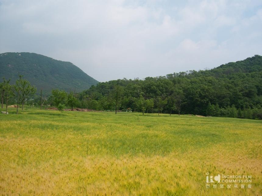 인천 대공원 유채,보리밭 (43).jpg